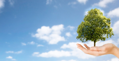 ecology, nature and environment concept - close up of hand holding tree over blue sky and clouds background