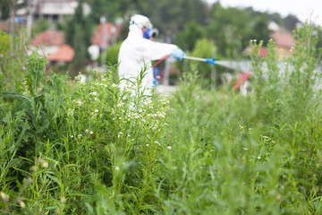 Worker in protective workwear spraying herbicide on ragweed. Hay fever concept.