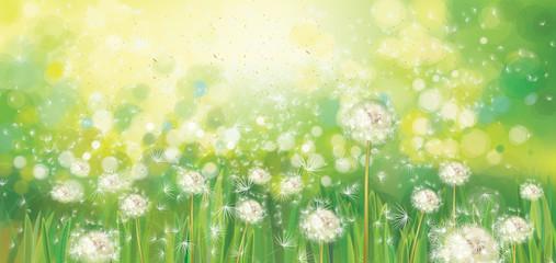Vector spring  green background,  white dandelions field in sunshine.