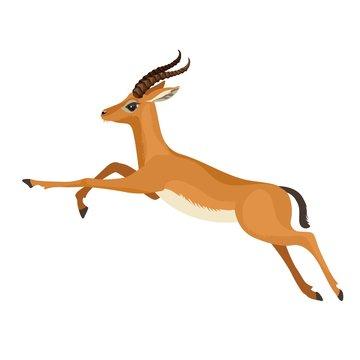 Gazelle or antelope with horn running in wildlife. African mammal animal. Vector