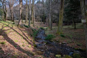 Fototapeta 冬の樹木公園を流れる小川