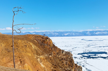 Baikal Lake in the April ice drift. The shores of the island of Olkhon near the village of Khuzhir. Beautiful old dry larch tree on a steep cape Burhan. Spring landscape, change of seasons