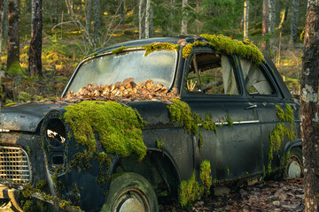 Mossy old car abandoned in a forest in Sweden