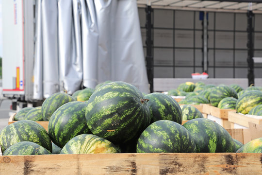 Watermelons at Pallets and Truck Trailer