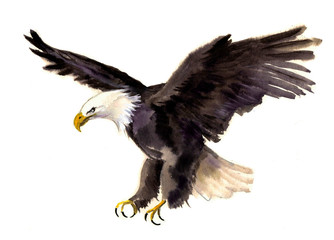 Cute watercolor eagle on the white background Fototapete