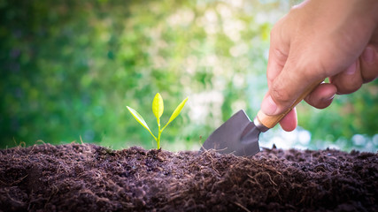 Smart Farmers hand planting seedlings in a germ-free and insect-free laboratory for growing seedlings for agriculture over blurred green nature background. environment concept.Ecology