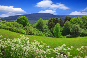 Summer landscape with wildflowers and green trees.