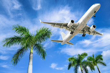 modern airliner arrives over palm trees