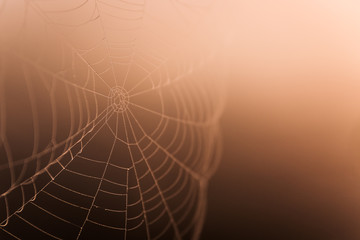 spider web with dew drops closeup. morning in nature orange color, gradient from light to dark tones