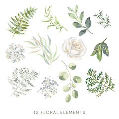 Rose, hydrangea, green leaves, fern, white background. Set of the floral greenery elements. Vector illustration. Romantic garden flowers. Wedding design clip art