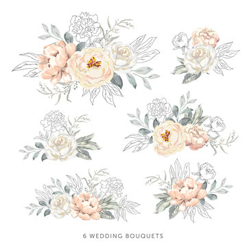 Blush roses, peonies with gray, outline leaves bouquets, white background. Set of the bridal floral arrangements. Vector illustration. Romantic garden flowers. Wedding design clip art