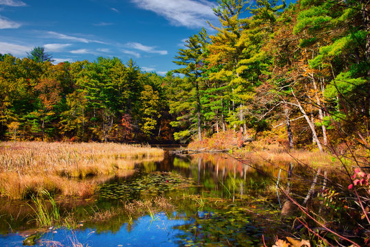 Pond at Chenango State Park in Autumn