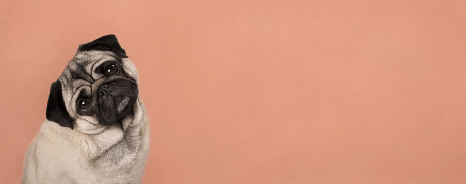 banner with cute pug puppy dog, sitting down, listening while tilting head, in front of lush lava orange wall background