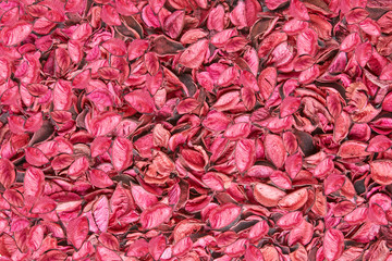 Background covered with pink and coral leaves