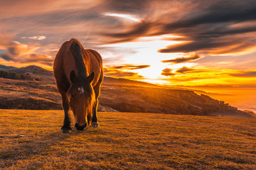 A brown horse eating at sunset from winged Jaizkibel of San Sebastian with the sun in the background. Basque Country Wall mural