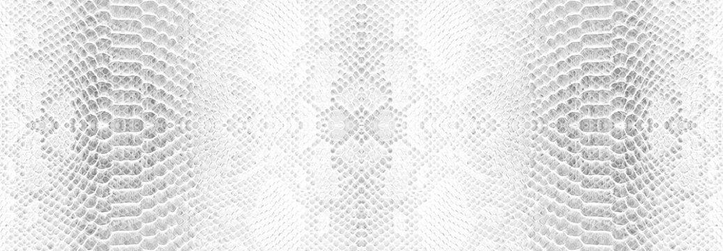 Skin snake background White snake skin texture Close-up