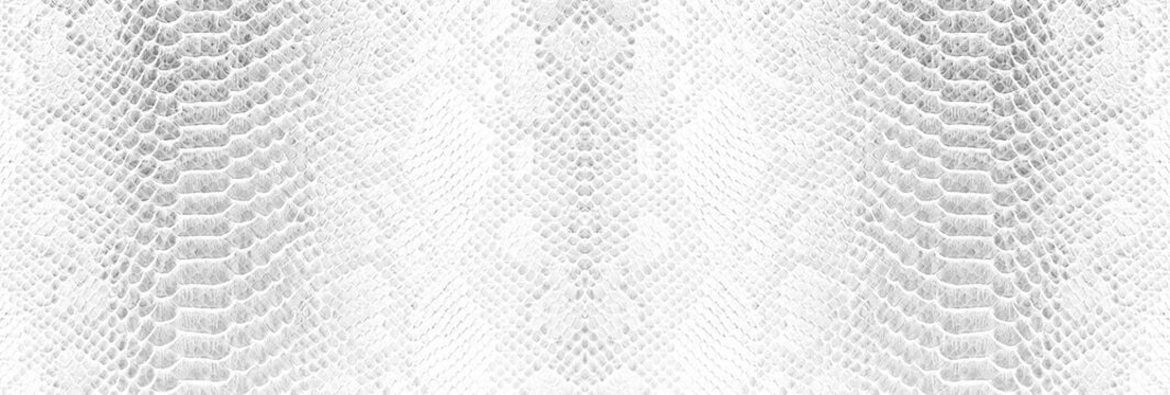 Skin snake background White snake skin texture Close-up