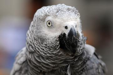 parrot rainbow, parrot, Birds, bird scream, parrot rainbow,