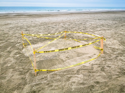 Protected Sea Turtle Nest. Barricaded sea turtle nest with yellow tape and ground meshing on the beach.