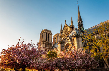 Paris Notre Dame Cathedral from Seine river during the spring