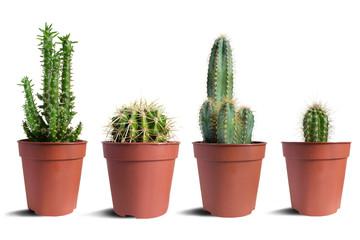 Photo sur Aluminium Cactus Houseplants in a pots isolated