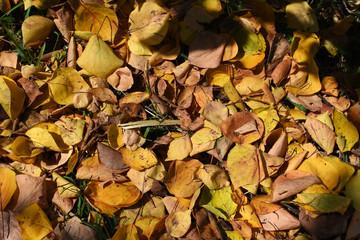 Fondo de hojas de otoño en colores amarillo, marrón y naranja. Al aire libre. Imagen de fondo colorida de las hojas de otoño caídas perfectas para uso estacional.