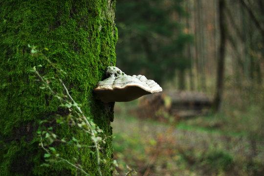 Ein Baumpilz im Wald