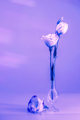 Violet and pink colored picture of flowers in a small narrow glass vase. Vertical shot with free copy space.