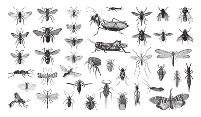 Insects collection / vintage illustration from Brockhaus Konversations-Lexikon 1908 Papier Peint