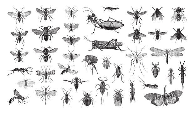 Insects collection / vintage illustration from Brockhaus Konversations-Lexikon 1908