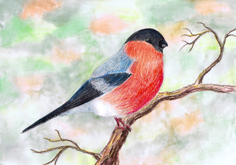 Bullfinch sits on a branch. Children's drawing, mixed media
