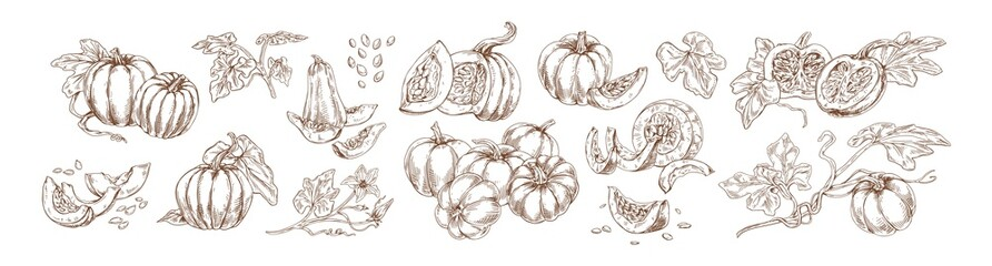 Pumpkin set monochrome drawings vector illustration. Traditional autumn harvest whole, slice and halves hand drawn collection. Agricultural produce various shape detailed sketch isolated on white