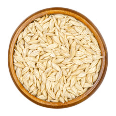 Spelt grains, seeds with outer husk in wooden bowl. Dinkel or hulled wheat, Triticum dicoccum. Cereal grain. European relict crop, used as health food. Macro food photo close up from above over white.
