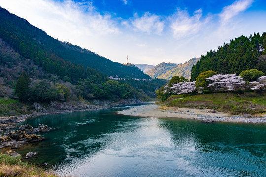 桜  春の季節 球磨川と美しい桜満開 Cherry Blossoms  Spring season  Kumakawa and beautiful cherry blossoms in full bloom Japan