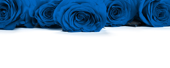 Keuken foto achterwand Roses Blue roses .Color of the year 2020 classic blue toned