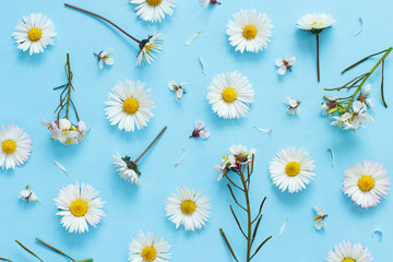 White wild flowers on a light blue background Fotomurales