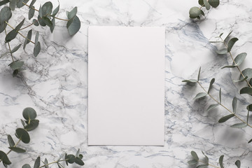 Beautiful abstract floral background. Flat lay, top view eucalyptus on marble background, flat lay on light textured stone table surface. Minimal concept with text space. Trendy background.