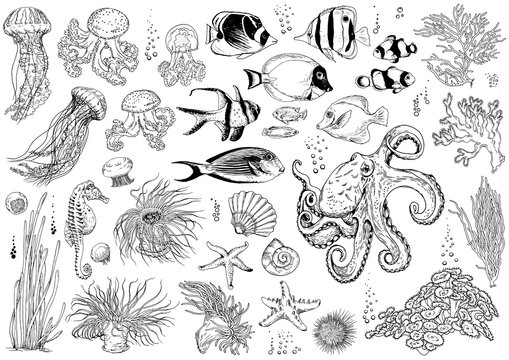 Set of underwater creatures, corals and tropical fishes.