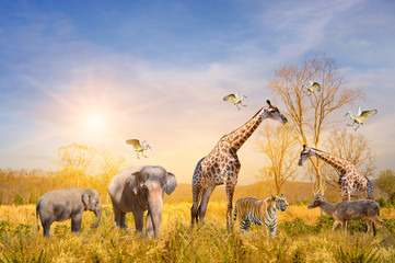 Large group of african safari animals. Wildlife conservation concept