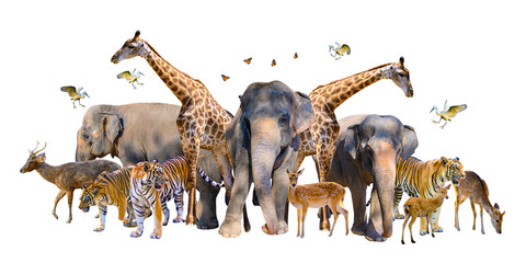 A group of wildlife such as deer, elephants, giraffes and other wild animals grouping together in a white background.Isolate Fotomurales