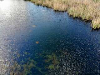 Algae growing out of control in lake
