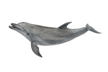 Foto op Plexiglas Dolfijn Big grey ocean dolphin isolated on white background for design