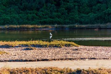 Heron at the famous wetland at Vravrona with rare birds, Attica, Mesogeia, Greece
