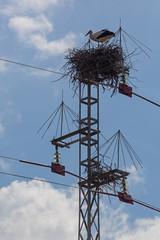 A one white stork in a nest on a man-made nest platform on a a power line column, Donana National Park, Huelva, Spain