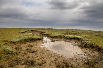Wall Mural - Salt marsh Ameland