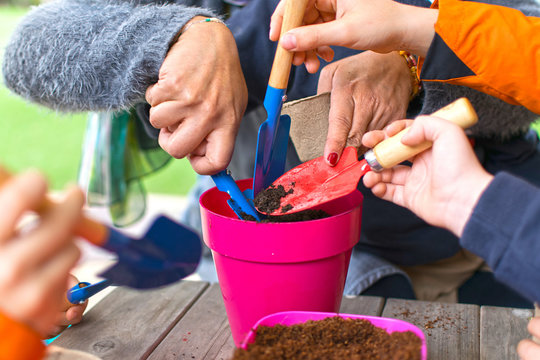Young children learning how to plant seeds in garden. Narrow depth of field of hands holding seeds and black soil in pot. Ecological garden at primary school in Spain.