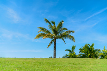 Palm tree and green grass field with blue sky