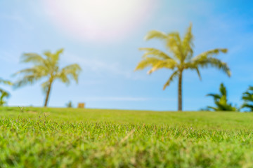 Green grass field with palm tree and blue sky on background