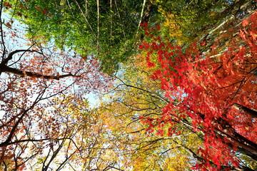 한국의 아름다운 가을 단풍 Fotobehang