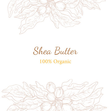 Vector illustration with template of shea nuts drawn by outline. Design for shea butter organic products packaging and label. Healthy and natural